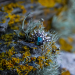 Labradorite & ornate half halo